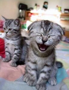 kucing-ketawa